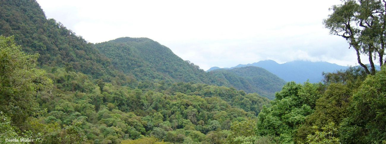 Yungas forests.