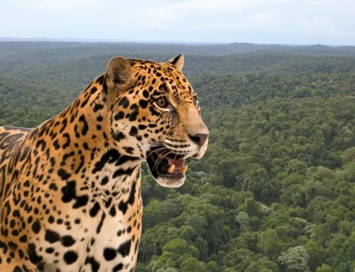 Registro de Áreas Protegidas Privadas en zonas de presencia de Yaguareté en Argentina.